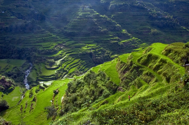 Solitude in the Banauwe Rice Terraces