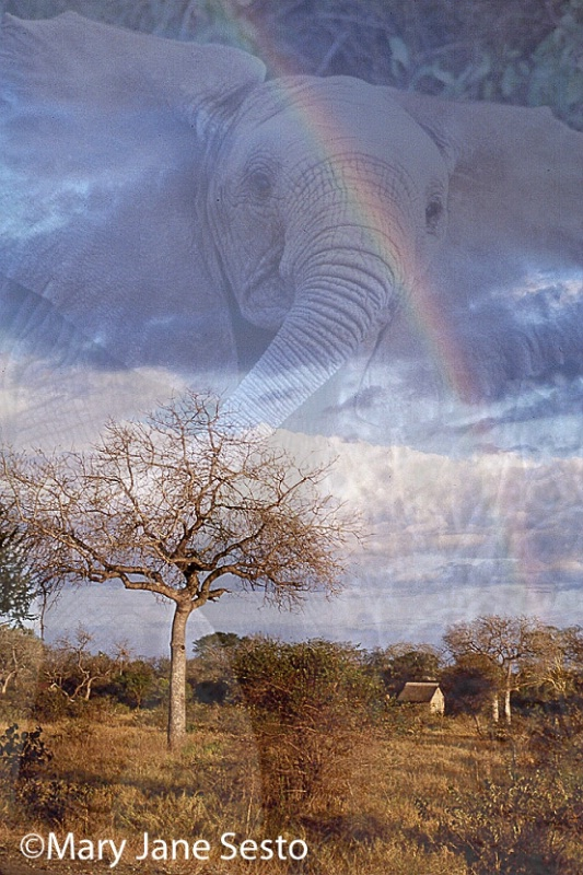 Elephant/Rainbow, South Africa