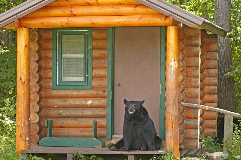 Black Bear on door-step