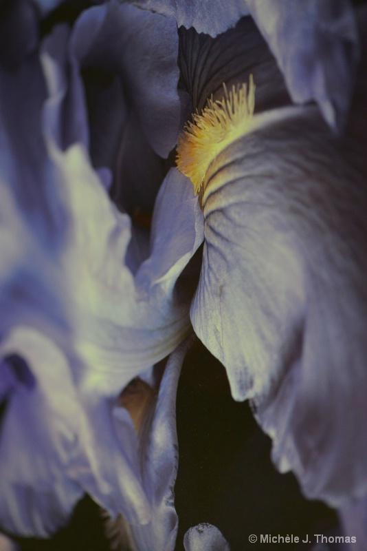 Magical Place Inside My Iris !