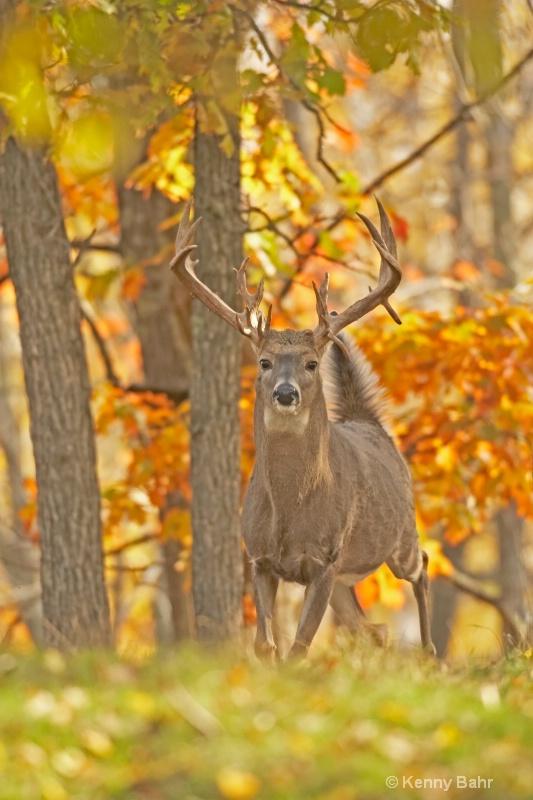 Buck on alert in autumn