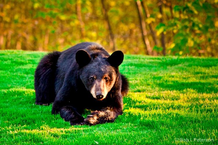 Mama Bear stares...