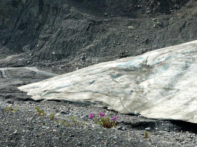 flowers near bottom of glacier