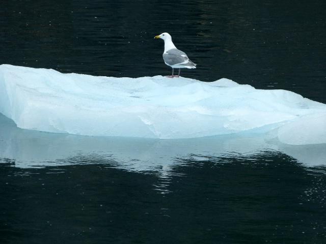 floating on iceberg