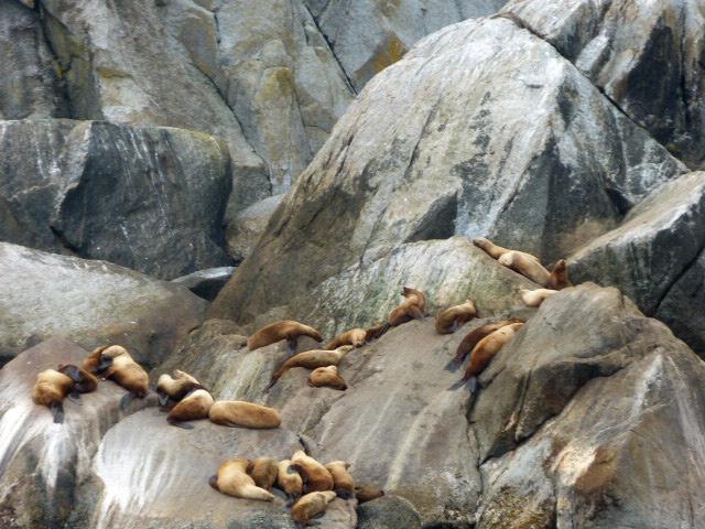 sea otters loitering