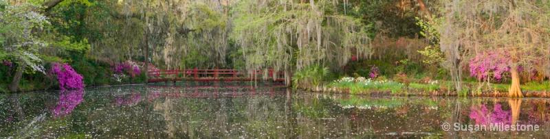 Red Bridge 13 Pan 2, Magnolia Plantation