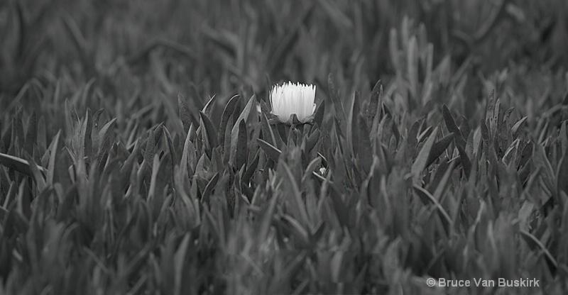 Lonesome flower