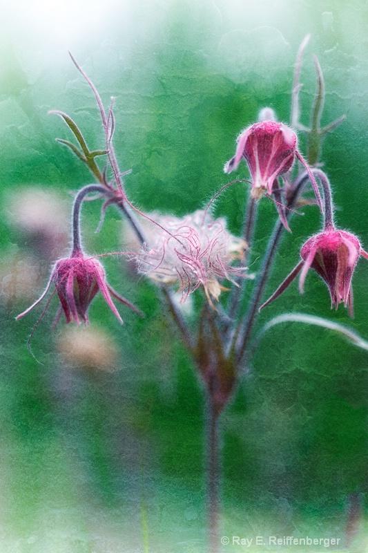 h0c5245t Flower13
