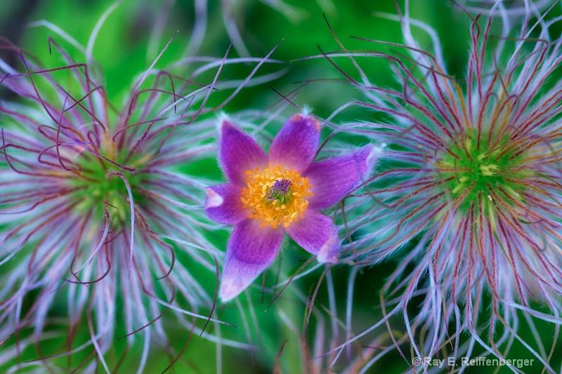 h0c5307 Flower13