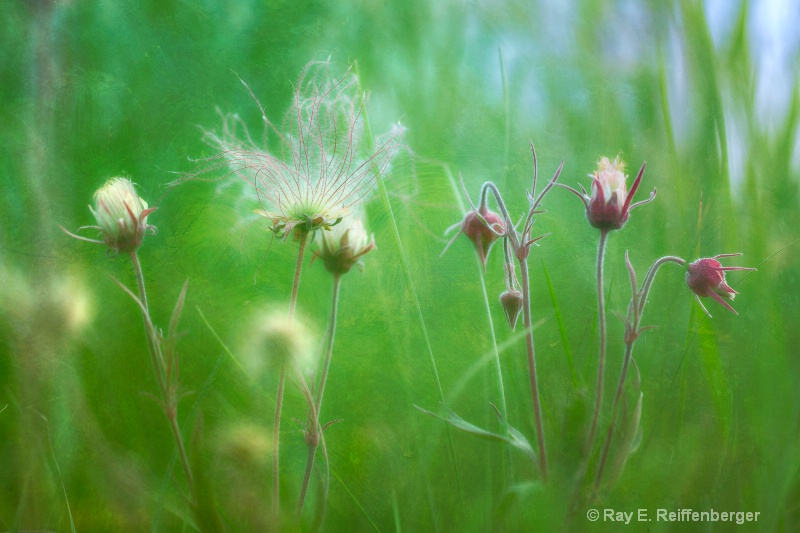 h0c5745 Flower13
