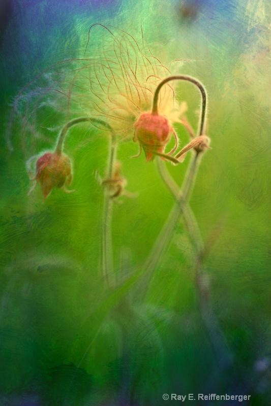h0c5992 Flower13