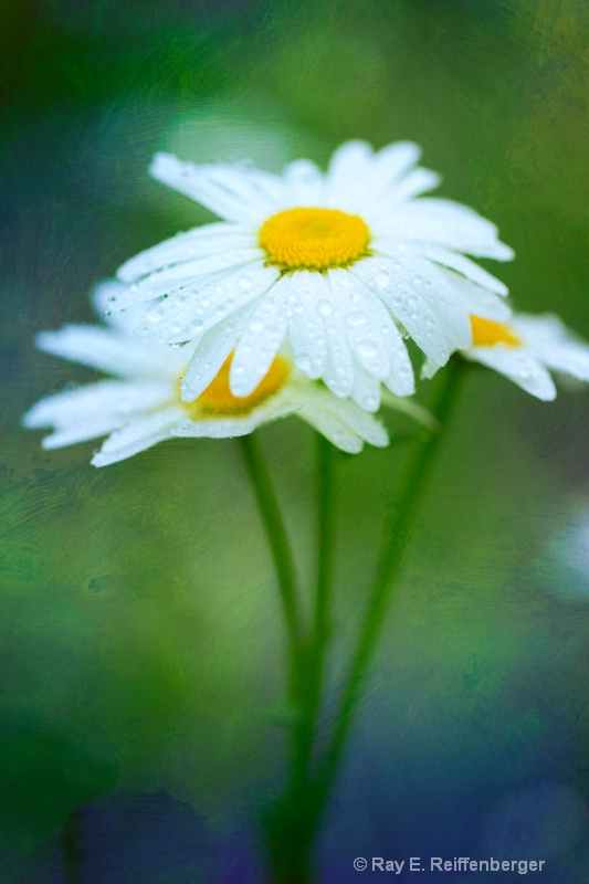 h0c6184 Flower13