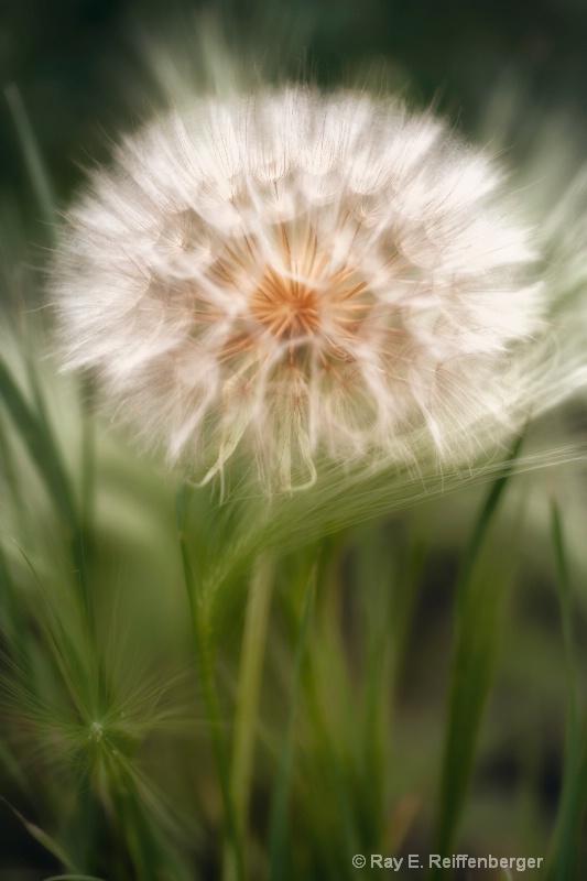 h0c7007 Flower13