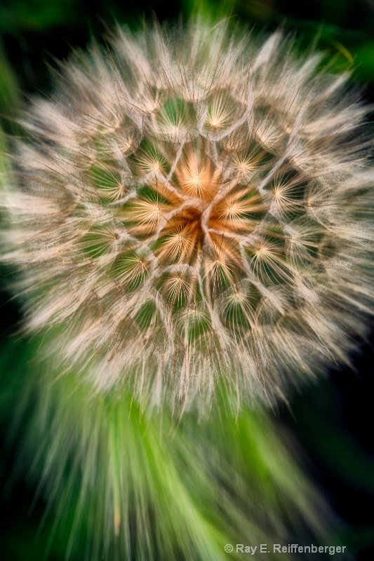 h0c7015 Flower13