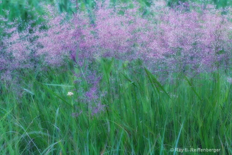 h0c7983 Flower13