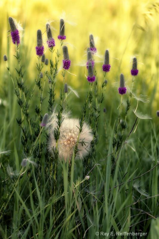 h0c8074 Flower13