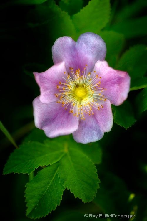 h0c8706c flower13