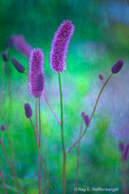 h0c6268tc flower13