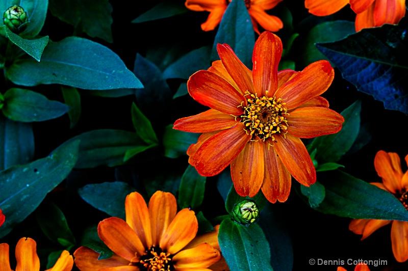 Flower, Mineral Palace, Pueblo, Colorado