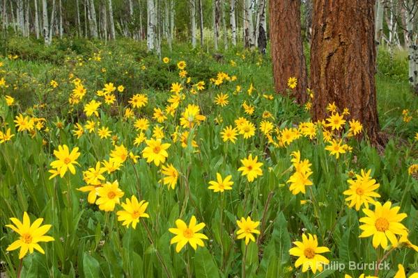 sun flower greeting