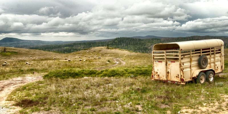 High Country Grazing