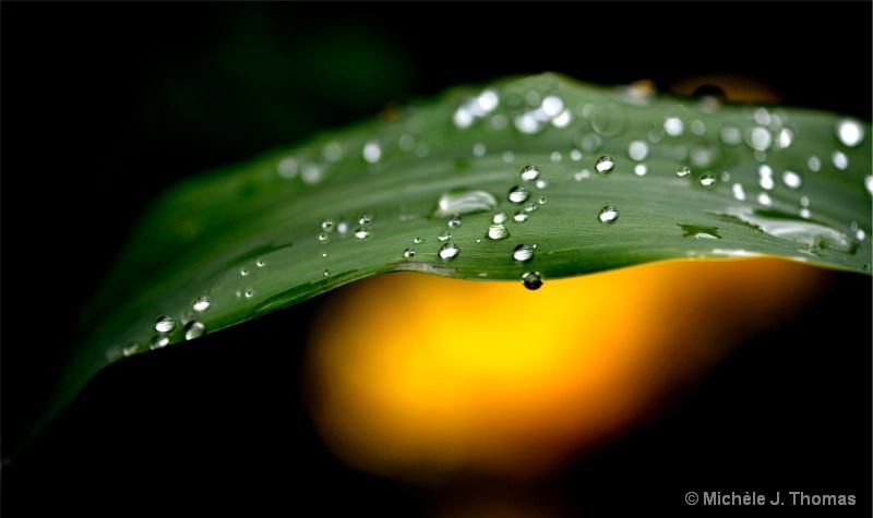 Rain Drops !