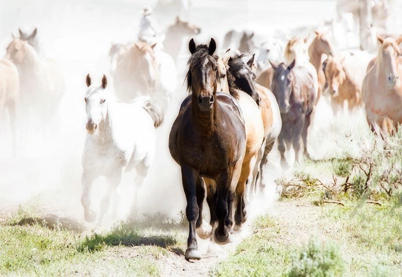 Hi Key Horses