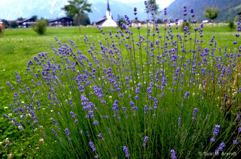 Lavender, Church and Mountains--Austria
