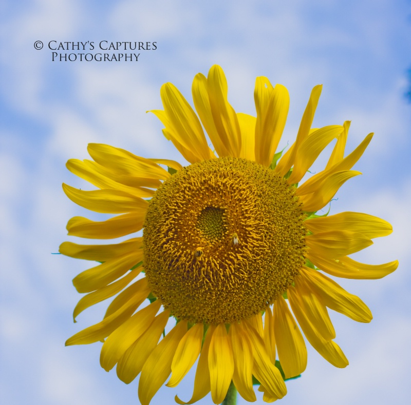 ~It's a Sunflower Day~