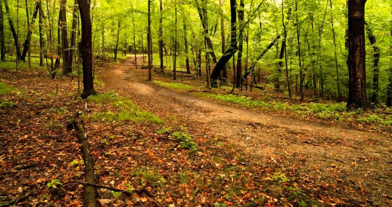 Stroll through Maplewood