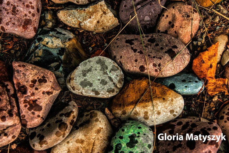 River stones in the rain, Flathead River, Montana