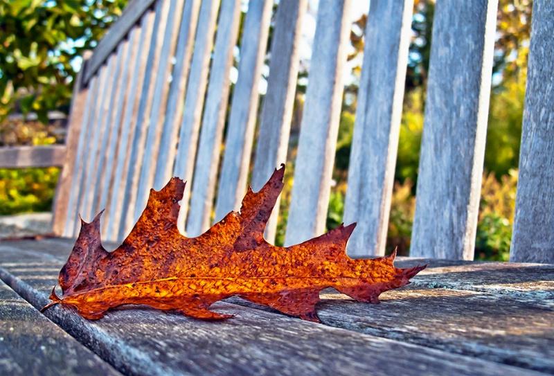Autumn Muze