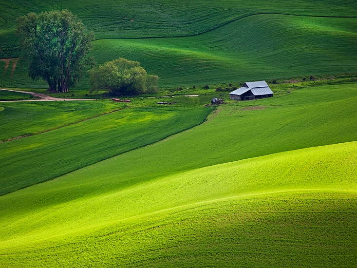 Palouse wheat fields, Washington