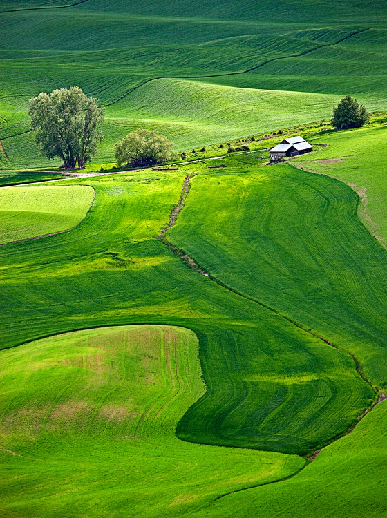 Palouse fields, Washington