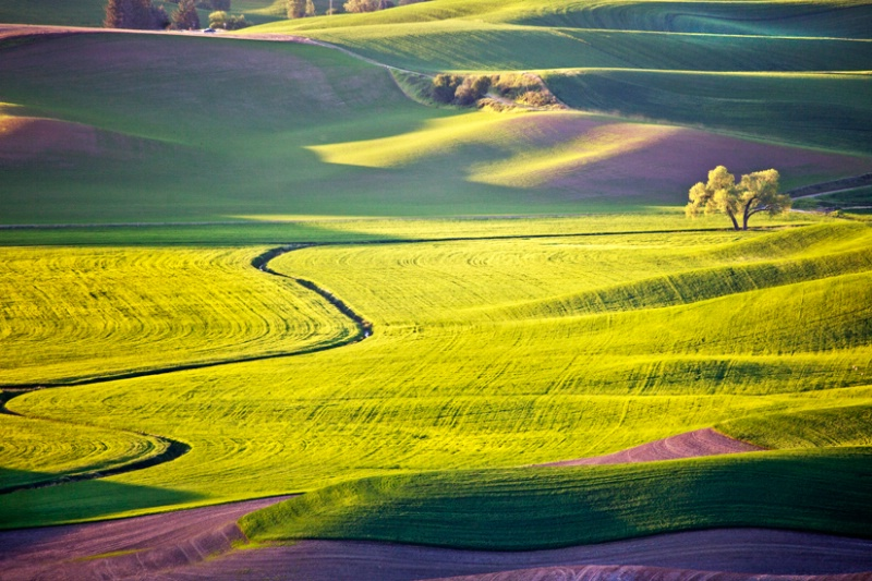 From Steptoe Butte 2, Palouse, Washington