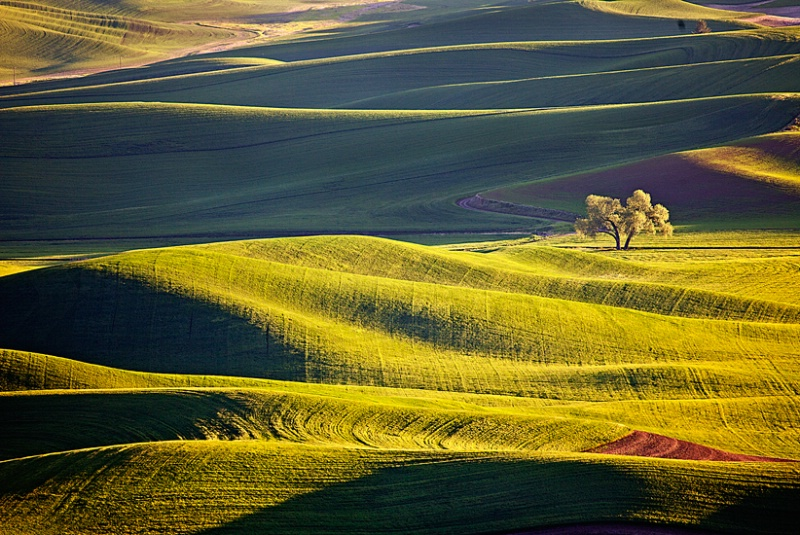 From Steptoe Butte, Washington