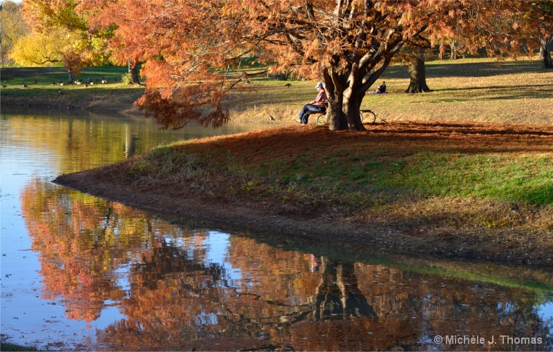 Reflections At The Park !
