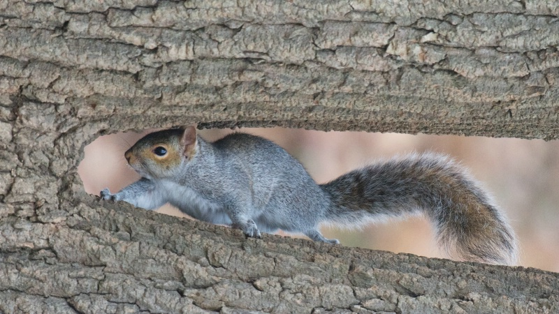 Squirrel in the Notch