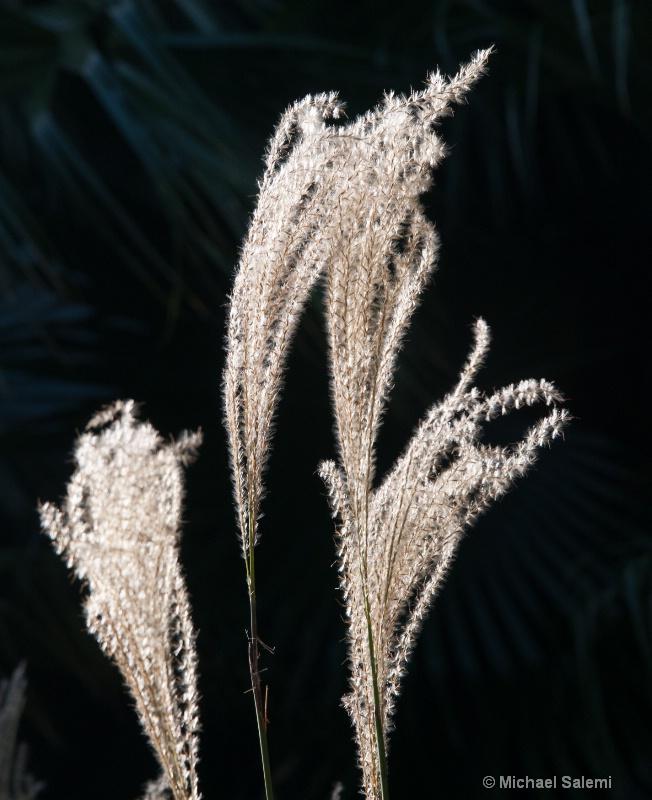 Flora 6