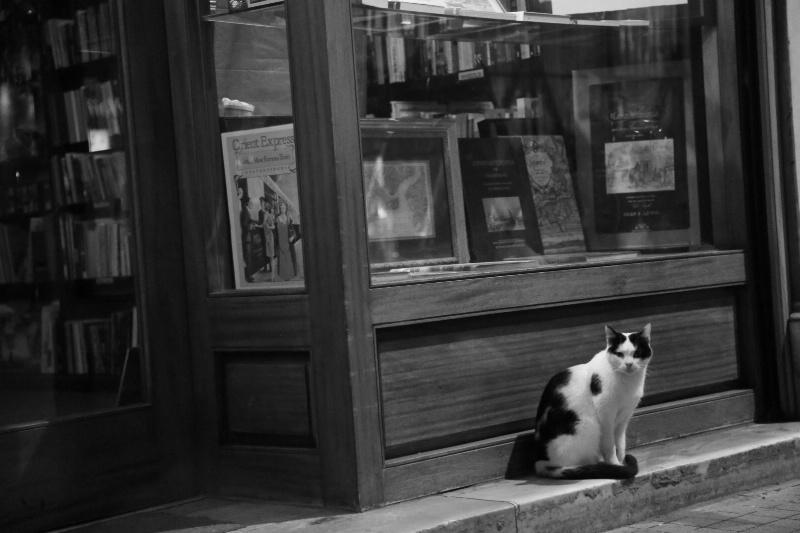 Orient Express Cat
