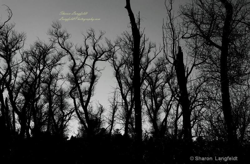 trees in b w