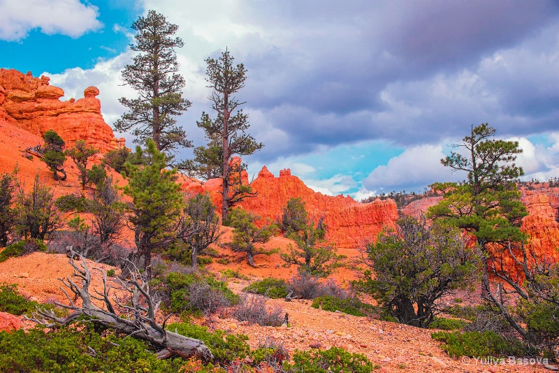 Red Canyon, Utah.