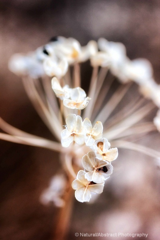 those pearly treasures