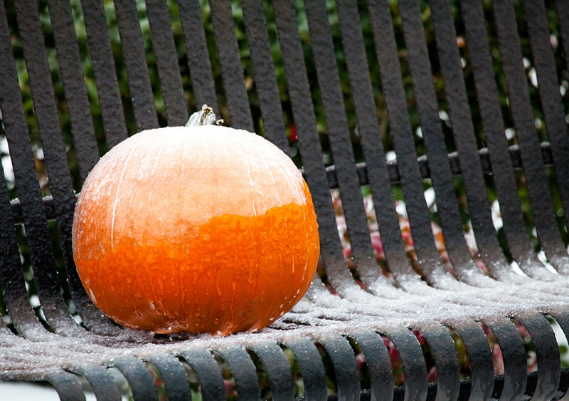 Jack Frost' the Pumpkin