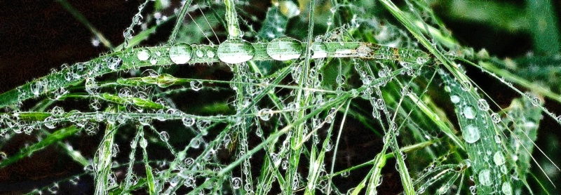 Bejeweled Grass 13