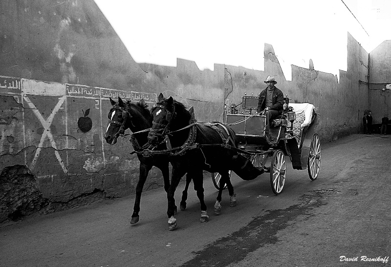 Horse Carriage in Morocco