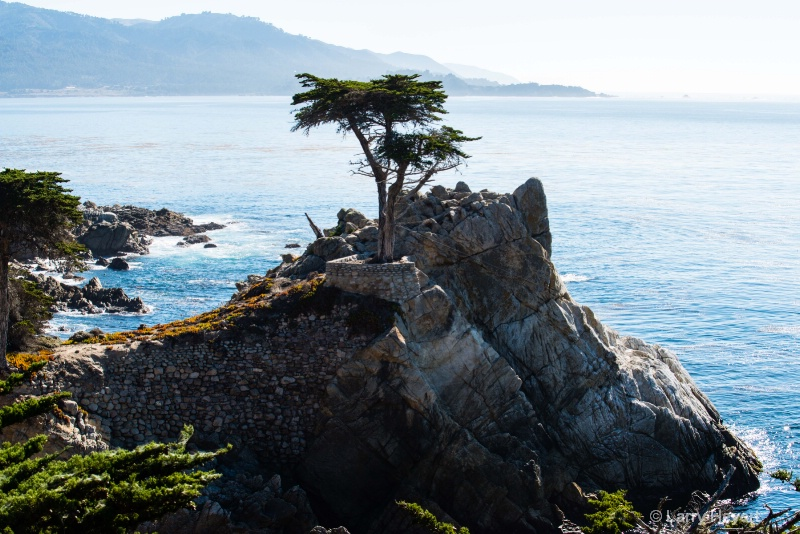 The Lone Cypress- Pebble Beach, CA