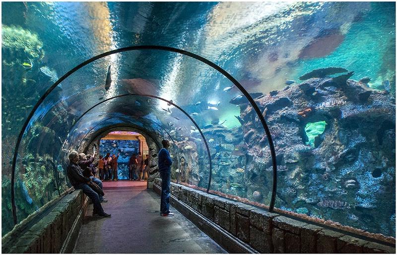 Circular Aquarium
