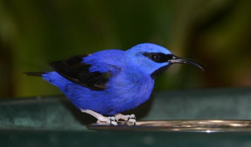 BIRD ON FEEDER, BRANSON AVIARY