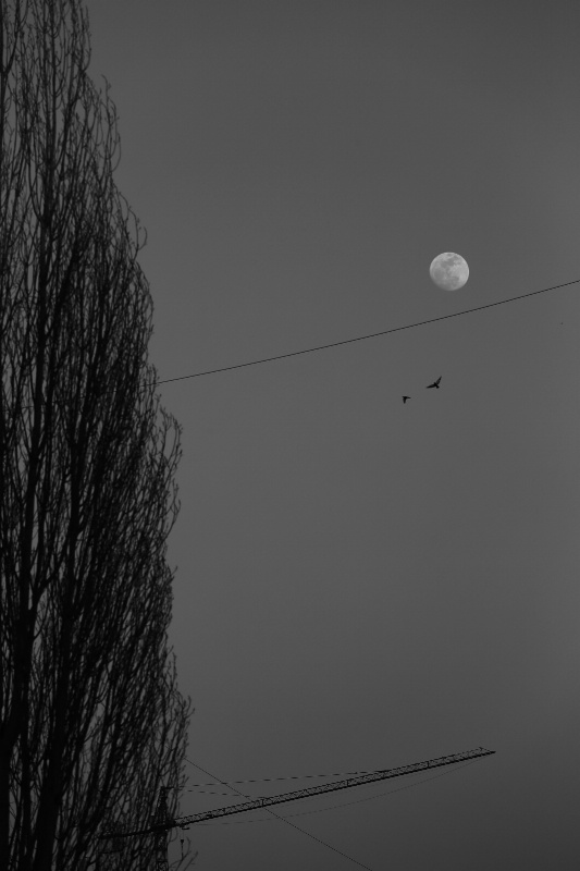 Fly Under the Moon